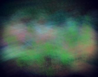 3234_DistantTrees