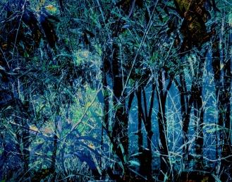 3978_foliageTreeSilouetteBlue_joelBowers.RisingRims