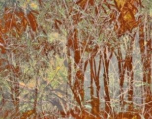3979_foliageTreeSilouetteBrown_joelBowers.RisingRims