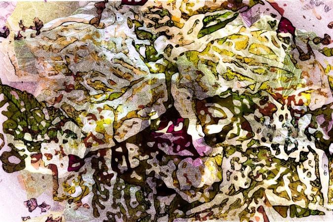 4169_Salad2_joelBowers.RisingRims